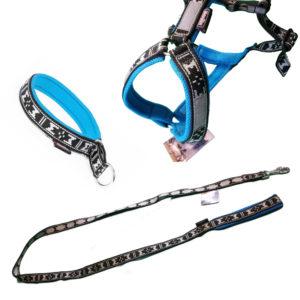 kit balade avec son chien, promenade - bleu